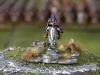 2012AustrianSalute_Web080