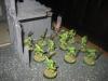 Karadras und seine Scorpions