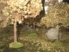 Blick in den Wald (aus Kräutern und Gewürzen)