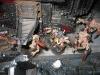 Mutanten-Oger (Deubler) schieben den Turm