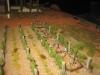 Linie in den Weingärten