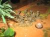 Und die Infanterie rückt durch den Dschungel vor