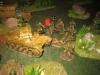 Das Afrikakorps im Dschungel