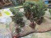 Inzwischen treffen die Ligurer auf die Römer im Olivenhain