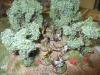 Die gallischen Schleuderer sitzen noch immer im hinteren Olivenhain
