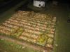 Derweilen die Infanterie Tulpen pflückt...