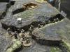 Ein schottisches Bataillon rückt in den Gräben vor