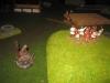 Und Morvan duelliert sich mit den Bauern - doch vergebens - die Niederlage ist besiegelt