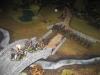 Die Kavallerie der Konföderierten muss der Übermacht weichen