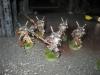 Grey Knights (Janko)