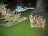 Luftkampf: Thron gegen Phönix